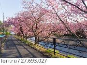 Купить «Cherry tree», фото № 27693027, снято 21 марта 2018 г. (c) PantherMedia / Фотобанк Лори