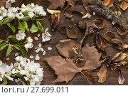Купить «Apfelbaumblüten und herbstliche Blätter auf Hintergrund aus Holz als Stillleben », фото № 27699011, снято 23 мая 2019 г. (c) PantherMedia / Фотобанк Лори