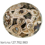 ball from Madagascar Rhyolite (turritella agate) Стоковое фото, фотограф Valery Vvoennyy / PantherMedia / Фотобанк Лори