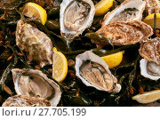 Купить «Fresh shucked oysters on a bed of kelp», фото № 27705199, снято 19 февраля 2018 г. (c) PantherMedia / Фотобанк Лори