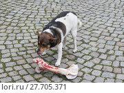 Купить «animal skin dog engulf devour», фото № 27705371, снято 17 июля 2019 г. (c) PantherMedia / Фотобанк Лори