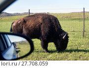 Купить «Buffalo of Oklahoma.», фото № 27708059, снято 19 июня 2018 г. (c) PantherMedia / Фотобанк Лори