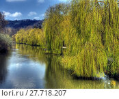 water tree river willow altmühl. Стоковое фото, фотограф Andreas Zieher / PantherMedia / Фотобанк Лори