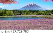 Купить «Fuji with the field of pink moss at Shibazakura festival, Yamanashi, Japan», фото № 27729783, снято 17 июля 2019 г. (c) PantherMedia / Фотобанк Лори