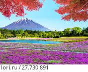 Купить «Fuji with the field of pink moss at Shibazakura festival, Yamanashi, Japan», фото № 27730891, снято 17 июля 2019 г. (c) PantherMedia / Фотобанк Лори