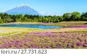 Купить «Fuji with the field of pink moss at Shibazakura festival, Yamanashi, Japan», фото № 27731623, снято 17 июля 2019 г. (c) PantherMedia / Фотобанк Лори