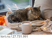 Купить «tabby cat lying on window sill with book at home», фото № 27731991, снято 15 ноября 2017 г. (c) Syda Productions / Фотобанк Лори