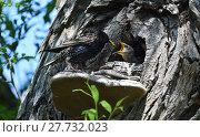 Купить «bird birds offspring chick bobolinks», фото № 27732023, снято 27 мая 2019 г. (c) PantherMedia / Фотобанк Лори