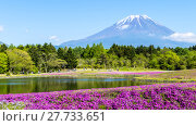 Купить «Fuji with the field of pink moss at Shibazakura festival, Yamanashi, Japan», фото № 27733651, снято 17 июля 2019 г. (c) PantherMedia / Фотобанк Лори