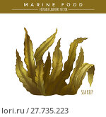 Купить «Sea Kelp. Marine Food», фото № 27735223, снято 19 февраля 2018 г. (c) PantherMedia / Фотобанк Лори