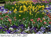 Купить «plant flower park spring flowers», фото № 27741287, снято 18 октября 2018 г. (c) PantherMedia / Фотобанк Лори