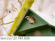 Купить «Eurasian Tree Sparrow in a Birdhouse», фото № 27741659, снято 21 октября 2018 г. (c) PantherMedia / Фотобанк Лори