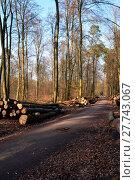 Купить «felled pines in the bienwald in jockgrim», фото № 27743067, снято 10 декабря 2018 г. (c) PantherMedia / Фотобанк Лори