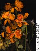Купить «old yellow plant flower flowers», фото № 27750727, снято 25 мая 2019 г. (c) PantherMedia / Фотобанк Лори