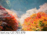 Купить «Nagoya, Obara Sakura in autumn», фото № 27751979, снято 25 июня 2019 г. (c) easy Fotostock / Фотобанк Лори