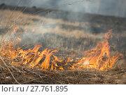 Купить «burns dry grass fire», фото № 27761895, снято 27 марта 2019 г. (c) PantherMedia / Фотобанк Лори
