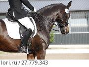 Купить «horse dressage», фото № 27779343, снято 25 мая 2018 г. (c) PantherMedia / Фотобанк Лори