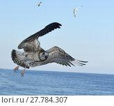 Купить «black sea,sveti konstantin.nikon d800e.13.09.2014», фото № 27784307, снято 20 марта 2019 г. (c) PantherMedia / Фотобанк Лори