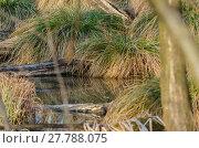 Купить «grass and wood in the moor», фото № 27788075, снято 22 июля 2019 г. (c) PantherMedia / Фотобанк Лори