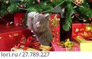 Купить «Little grey kitten playing with Christmas decorations under a Christmas tree», видеоролик № 27789227, снято 30 ноября 2015 г. (c) Алексей Кузнецов / Фотобанк Лори