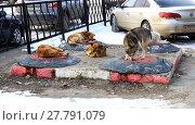 Купить «Бездомные собаки в городе греются на люках теплотрассы. Город Липецк», фото № 27791079, снято 13 февраля 2018 г. (c) Евгений Будюкин / Фотобанк Лори