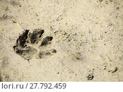Купить «Dog paw imprint», фото № 27792459, снято 17 октября 2018 г. (c) PantherMedia / Фотобанк Лори