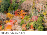 Купить «Nagoya, Obara Sakura in autumn», фото № 27807571, снято 25 июня 2019 г. (c) easy Fotostock / Фотобанк Лори
