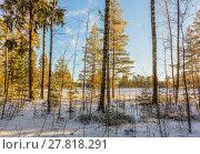 Купить «Зимний пейзаж с заснеженными деревьями на краю поля», фото № 27818291, снято 8 января 2018 г. (c) Сергей Васильев / Фотобанк Лори