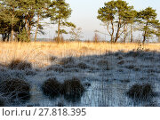 Купить «Frozen and gold colored grass», фото № 27818395, снято 19 марта 2019 г. (c) PantherMedia / Фотобанк Лори