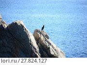 Купить «water sea ocean bird mediterranean», фото № 27824127, снято 25 марта 2019 г. (c) PantherMedia / Фотобанк Лори