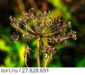 Купить «Horizontal vivid yellow nature plant closeup macro on green boke», фото № 27828691, снято 23 июля 2018 г. (c) PantherMedia / Фотобанк Лори