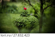 Купить «pedestal Urn with flowers», фото № 27832423, снято 16 сентября 2019 г. (c) PantherMedia / Фотобанк Лори
