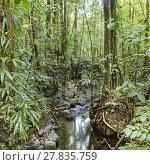 Купить «dense jungle with small creek», фото № 27835759, снято 22 июля 2019 г. (c) PantherMedia / Фотобанк Лори