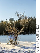 Купить «snow covered branches of a tree under blue sky», фото № 27843427, снято 19 ноября 2018 г. (c) PantherMedia / Фотобанк Лори