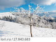 Купить «Winter hoar frosting trees, tower and snowdrifts (Carpathian mountain, Ukraine)», фото № 27843683, снято 23 января 2018 г. (c) Юрий Брыкайло / Фотобанк Лори