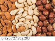 Купить «Variety of Mixed Nuts», фото № 27852283, снято 18 января 2019 г. (c) PantherMedia / Фотобанк Лори
