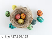 Купить «Eggs and nest», фото № 27856155, снято 21 сентября 2019 г. (c) PantherMedia / Фотобанк Лори