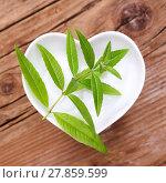 Купить «homeopathy and cooking with medicinal herbs,verbena», фото № 27859599, снято 19 января 2019 г. (c) PantherMedia / Фотобанк Лори