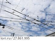 Купить «salzburg,road traffic,overhead contact line,suburban bus,bus,electricity,power line,line», фото № 27861995, снято 23 февраля 2019 г. (c) PantherMedia / Фотобанк Лори