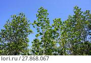 Купить «forest mangrove horizontal», фото № 27868067, снято 22 июля 2019 г. (c) PantherMedia / Фотобанк Лори