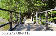 Купить «forest mangrove and the bridge walkway», фото № 27868115, снято 22 июля 2019 г. (c) PantherMedia / Фотобанк Лори