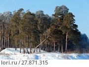Купить «Сосновая опушка с упавшей сосной. Зима», эксклюзивное фото № 27871315, снято 8 февраля 2018 г. (c) Анатолий Матвейчук / Фотобанк Лори