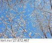 Купить «Заснеженные ветки деревьев», эксклюзивное фото № 27872467, снято 6 февраля 2018 г. (c) lana1501 / Фотобанк Лори