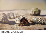 Купить «Beautiful seashells on the stone floor. Background with different . Shallow depth of field. Toned image.», фото № 27882251, снято 20 марта 2019 г. (c) PantherMedia / Фотобанк Лори