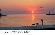 Купить «Flying seagulls over the sea at sunset», видеоролик № 27888607, снято 19 марта 2019 г. (c) Данил Руденко / Фотобанк Лори