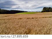 Купить «cornfield», фото № 27895659, снято 20 октября 2018 г. (c) PantherMedia / Фотобанк Лори