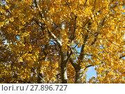 Купить «Collection of Beautiful Colorful Autumn Leaves», фото № 27896727, снято 17 июня 2019 г. (c) PantherMedia / Фотобанк Лори