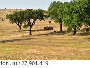 Купить «Rural lanscape, Alentejo, Portugal», фото № 27901419, снято 12 июня 2017 г. (c) Знаменский Олег / Фотобанк Лори