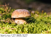 Купить «basket of fresh summer mushroom», фото № 27905527, снято 26 мая 2019 г. (c) PantherMedia / Фотобанк Лори