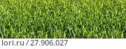 Купить «green view summer spring grass», фото № 27906027, снято 22 апреля 2019 г. (c) PantherMedia / Фотобанк Лори